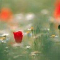 Poppyy