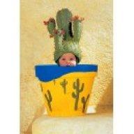 kaktusz1990