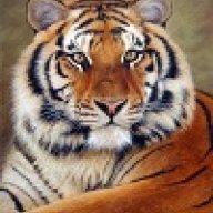 Tigris5